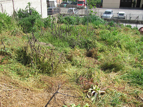 The BEFORE picture: Weeds, weeds, weeds